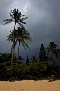 Silhouettes of Coconut palm trees against a dark sky  Storm moving in   North Shore of O'ahu, Hawai'i