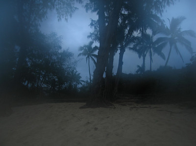 Coconut Palm trees silhouetted against a misty blue sky on the ocean   Sunset Beach on the North Shore of O'ahu, Hawai'i