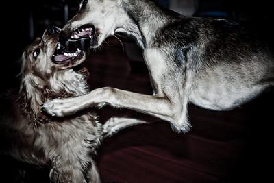 70  Dogfight