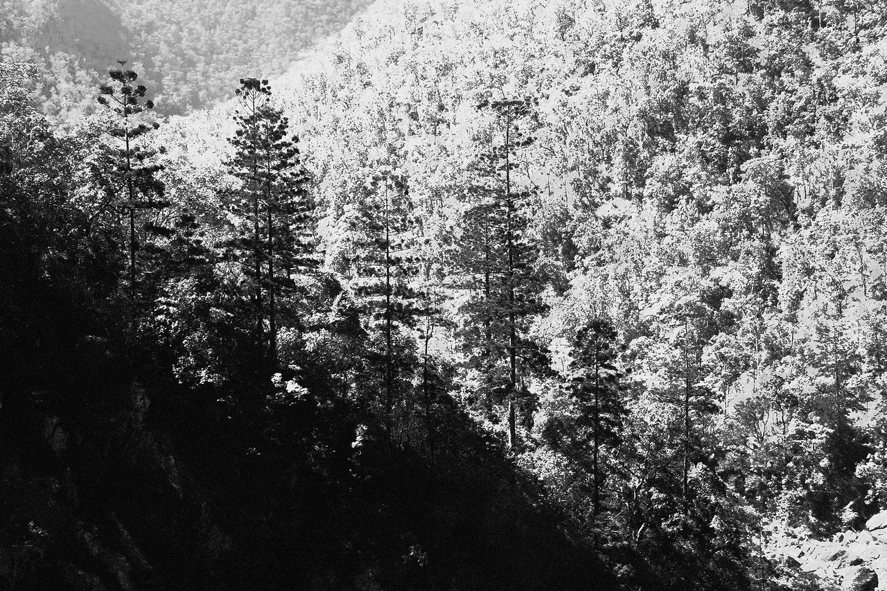 Araucaria Towers before The Gates of Yabba Gorge