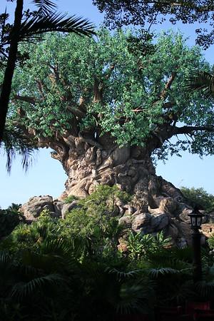 Disney 2015 -Our Shots