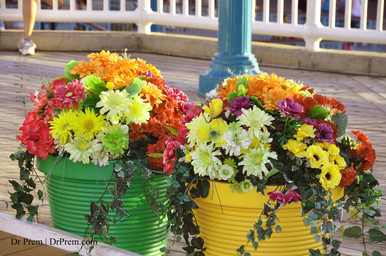 A Splurge Of Colors In Full Bloom