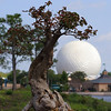 Bonsai at Japan, with Spaceship Earth in the background.