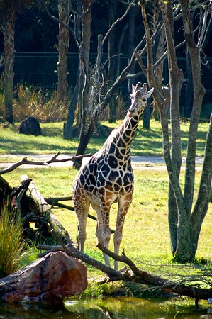 Disney: Animal Kingdom