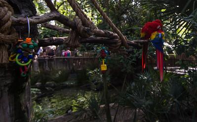 Parrot at Animal Kingdom