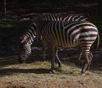 Kilimanjaro Safari