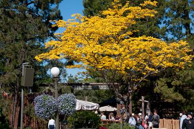 Disneyland April 2010 (37 of 72)