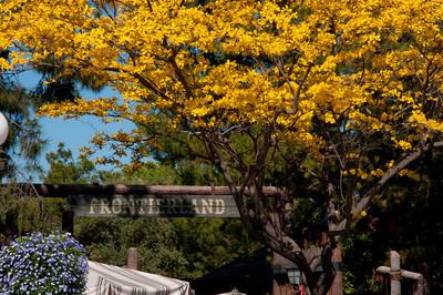 Disneyland April 2010 (1 of 35)