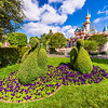 Disneyland Swan Topiaries & Sleeping Beauty Castle.