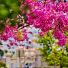"One of the Top 10 ways to photograph Sleeping Beauty Castle! <br /> <br /> Read more: <a href=""http://www.disneytouristblog.com/sleeping-beauty-castle-photo-spots/"">http://www.disneytouristblog.com/sleeping-beauty-castle-photo-spots/</a>"