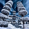 These Tomorrowland trees (photographed here in infrared) are my favorite trees in the Magic Kingdom.