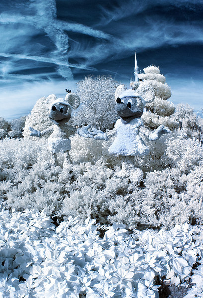 Minnie and Mickey Mouse frolic in the snow covered(?) Magic Kingdom Rose Garden?!