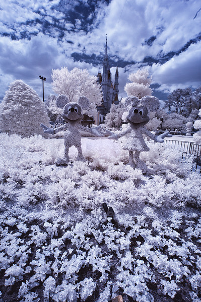 Infrared photo of Mickey Mouse and Minnie Mouse topiaries in the Magic Kingdom.