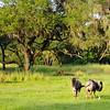 Kilimanjaro Safari at Disney's Animal Kingdom