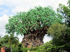 Tree of Life in Animal Kingdom