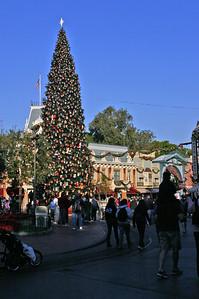Main Street Xmas tree morning.