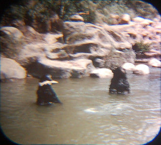 1959 Viewmaster of bears in Rivers of America.