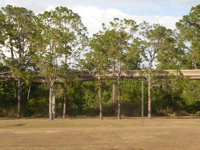 Monorail tracks amid trees