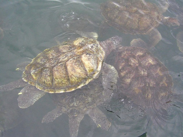 Grand Cayman Turtle Farm