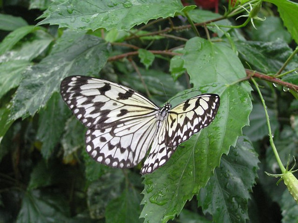 Grand Cayman butterfly farm