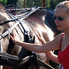There's Nancy checking out one of the beautiful horses on Main Street.