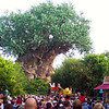"For our final day at ""Walt Disney World"" we enjoyed ""Animal Kingdom"" Park... there's Mickey & Minnie greeting us at the start of the day at the ""Tree of Life""."