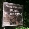 "Of course, no visit to Animal Kingdom would be complete without doing the ""Safari"" at the ""Harambe Wildlife Reserve""! :-)"