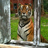 "During the ""Maharajah Jungle Trek"" we got to see this amazing animal... very cool!"