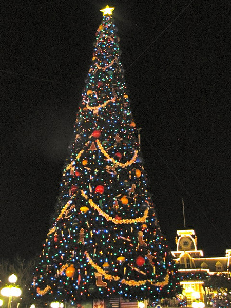 "Earlier in this album we showed you the huge trees like this at Hollywood Studios, Epcot & Animal Kingdom... doesn't the ""lit up"" version look much better though... very pretty! :-)"