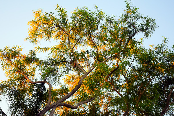 Morning Trees at Animal Kingdom