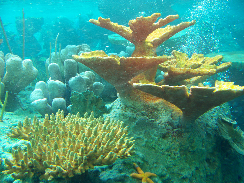 Disneyland - Finding Nemo Submarine Voyage