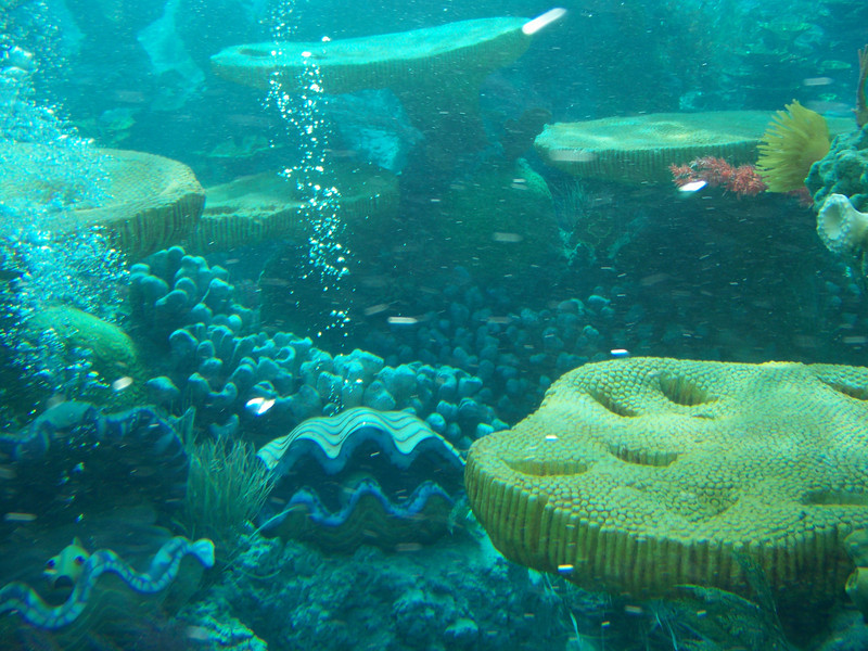Disneyland - Tomorrowland - Finding Nemo Submarine Voyage