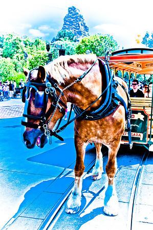 Disneyland 5-10-12