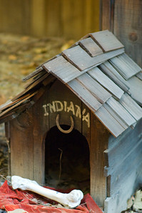 """This picture was taken on my birthday in 2007.  Indiana's Doghouse is located by the Disneyland Railroad tracks right before you pull into Toontown Station.  This doghouse pays homage to George Lucas, and his popular movie character, Indiana Jones.  Lucas and Industrial Light and Magic had a hand in designing  """"Star Tours"""" and """"Indiana Jones and the Temple of the Forbidden Eye"""".  Movie fans will remember, Dr. Jones took his nickname from his dog, who made a brief cameo in """"The Last Crusade""""."""