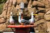 2007-06-03 - Disneyland - Finding Nemo Submarine Ride Opening - 028 - DSC_6890