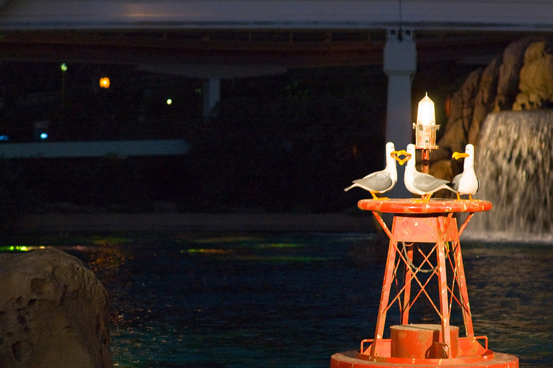 2007-11-14 - 246 - Disneyland Birthday - Nemo Submarine Voyage (Seagulls) - _DSC9284