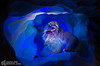FLURRY OF 'NEW MAGIC' AT MATTERHORN BOBSLEDS (May 20, 2015) – The classic Disneyland park attraction features new special effects and the Abominable Snowman as guests have never seen him before. (Paul Hiffmeyer/Disneyland Resort)