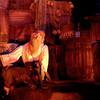 Le Vieux Pirate et son Rhum