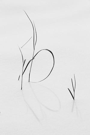 Grasses and shadows in snow, Hampton, VA. © 2014 Kenneth R. Sheide