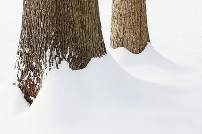 Trees in snow, Hampton, VA. © 2014 Kenneth R. Sheide