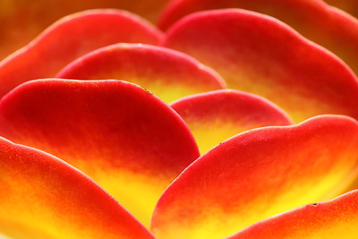 Paddle Plant detail, Norfolk Botanical Garden, VA. © 2014 Kenneth R. Sheide