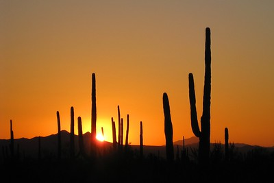 Sunset in Saguaro National Park, AZ. © 2008 Kenneth R. Sheide