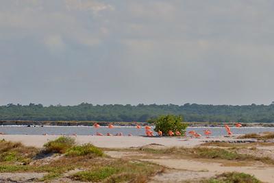 Flamingos at Las Coloradas, Yucatan, Mexico. © 2018 Kenneth R. Sheide