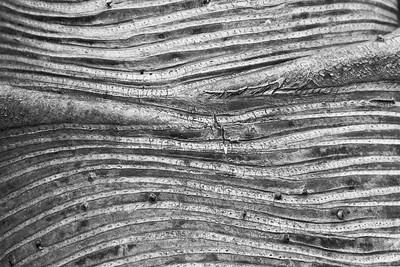 Tree bark detail, Lewis Ginter Botanical Garden, Richmond, VA. © 2014 Kenneth R. Sheide