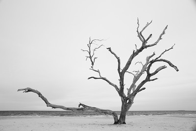 Old tree at Grandview, Hampton, VA. © 2013 Kenneth R. Sheide