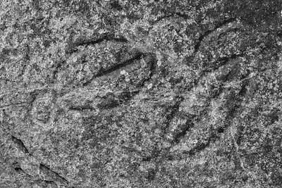 Wedding Rocks petroglyphs, Cape Alava, Olympic National Park, Washington. © 2007 Kenneth R. Sheide