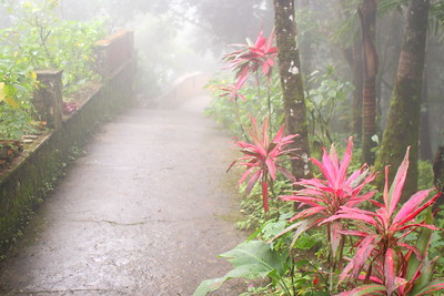 Garden path enshrouded in fog at the top of Mount Isabela de Torres. Puerto Plata, Dominican Republic. © 2006 Kenneth R. Sheide