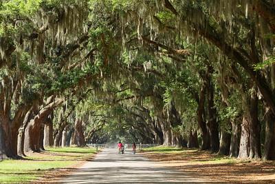 Children riding bikes on road through live oaks at Wormsloe, Savannah, GA. © 2021 Kenneth R. Sheide