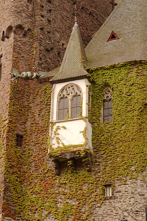 Ivy, window, and gargoyle on Eltz Castle in Germany. © 2004 Kenneth R. Sheide