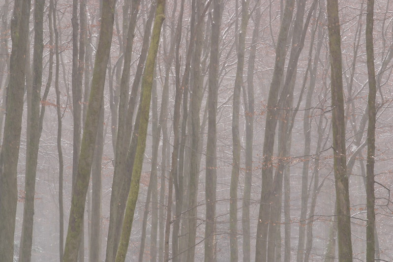 Snow flurry in the woods of the Karlstal Gorge near Trippstadt, Germany. © 2004 Kenneth R. Sheide